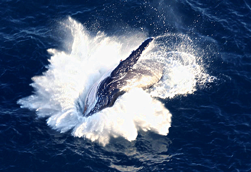 Whale Watching Flights in South Africa