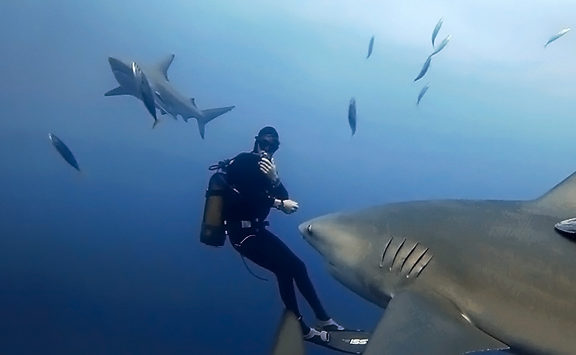 Bull Sharks South Africa