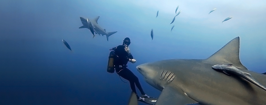 Bull-Shark-and-diver
