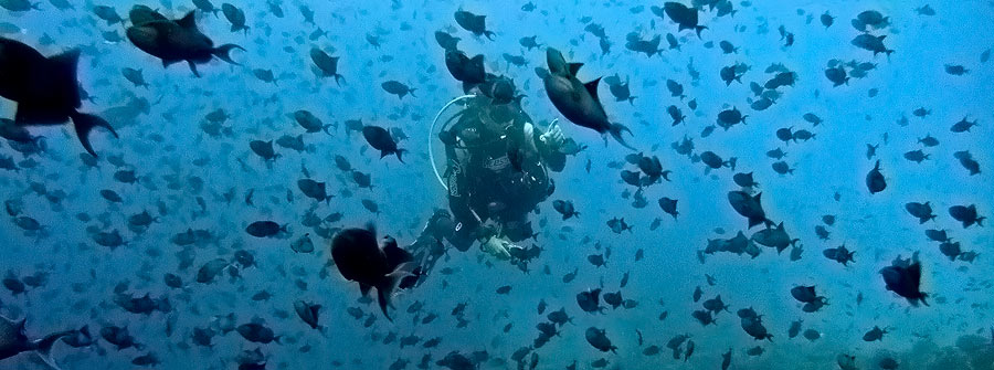 Dive-Sodwana-Bay-KZN
