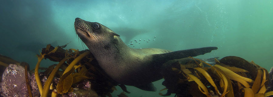 Dive-With-Seals-Cape-Town-South-Africa2
