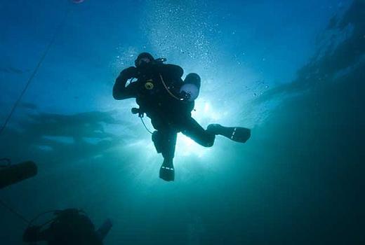 Dive_Cape_Town