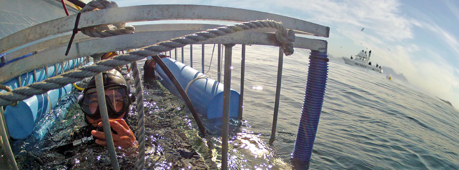 Diver-Cage-Diving-Cape-Town