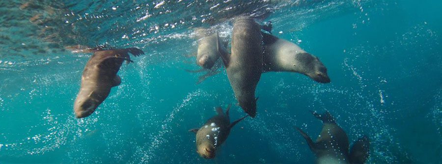 Diving-with-Seals-Cape-Town