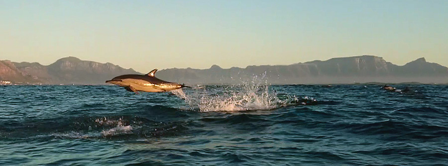 Dolphin-Watching-Tours-South-Africa