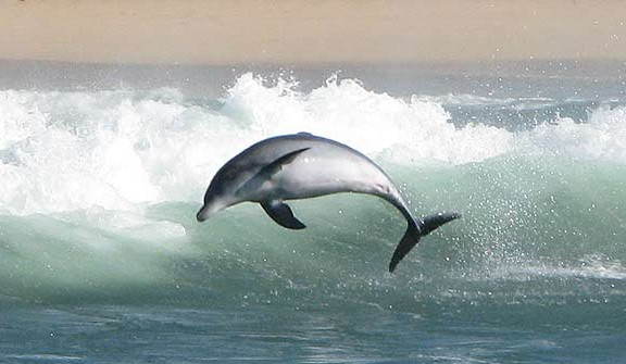 Dolphin watching tours and charters