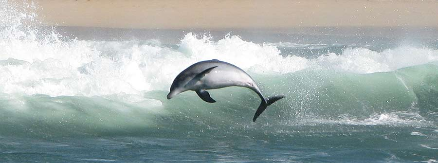 Dolphin-watching-tours-and-charters