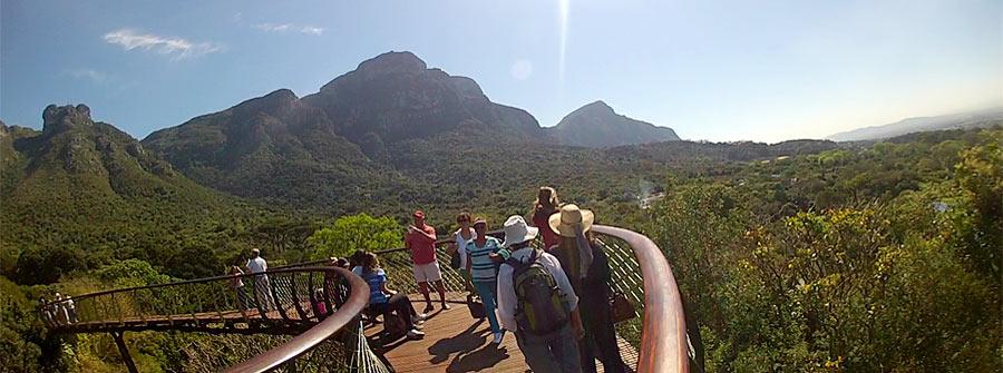 Kirstenbosch-Boomslang