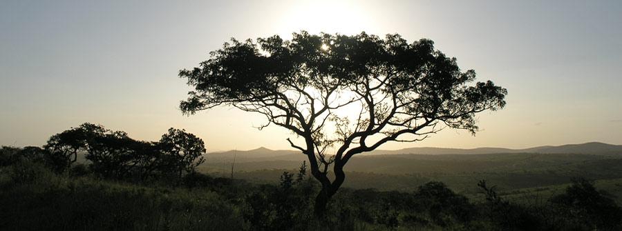 KwaZulu-Natal-Game-Reserve