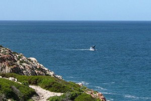 Land based whale watching South Africa