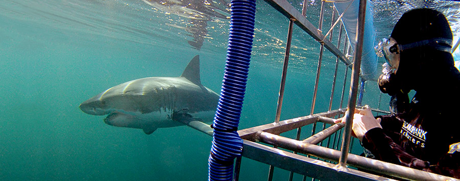 Shark-Cage-Diving-Tours-South-Africa