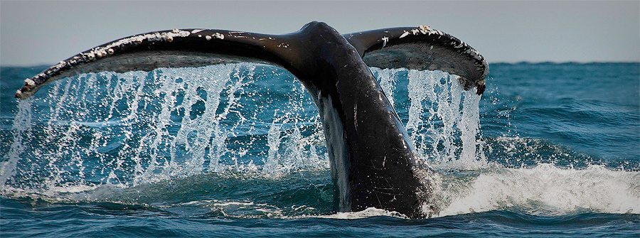 Whale-Watching-Tours-South-Africa-1
