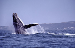 Whale-Watching-charters