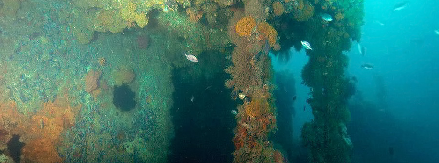 Wreck-Diving-Cape-Town