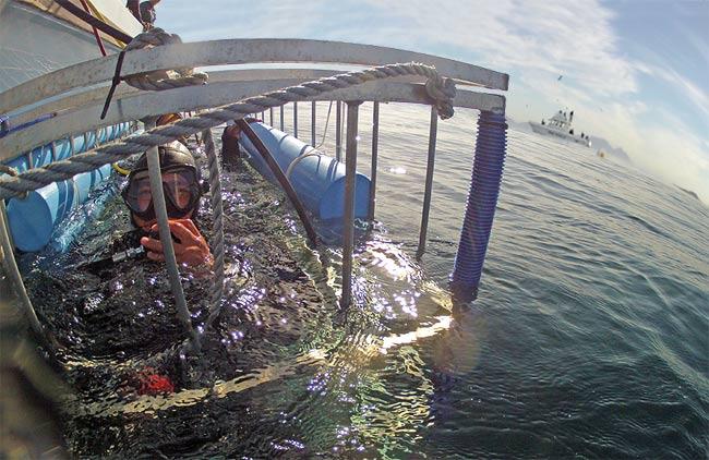 Shark Cage Diver