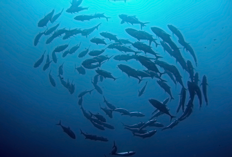 Dive Safari Sodwana Bay