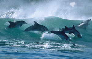 Dolphin watching tours & charters South Africa
