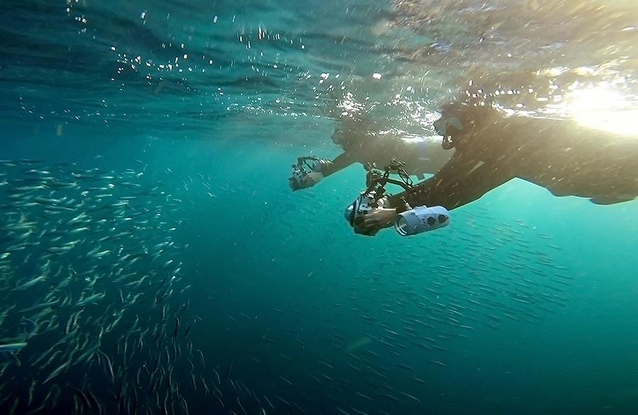 Sardine Run Snorkellers