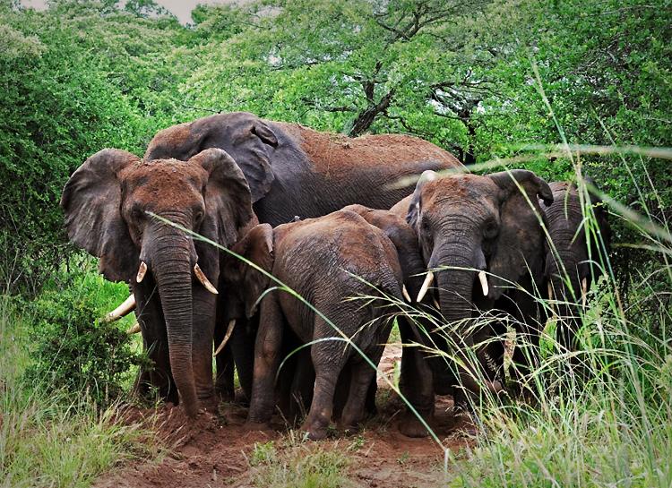 Dive Safari Tour South Africa